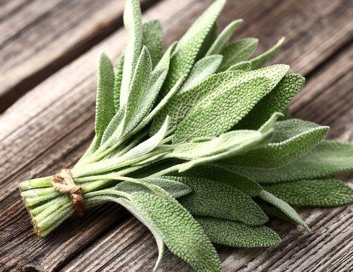 La salvia: un rimedio naturale per i sintomi della menopausa
